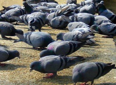 An Urban Bird Sanctuary