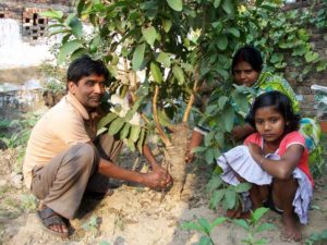Dharhara in Bihar plants fruit trees for the birth of a girl child