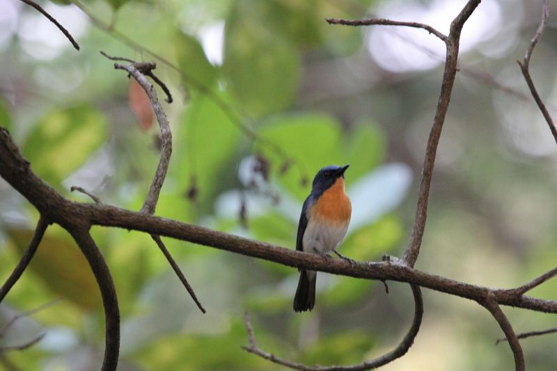 TBI Wildlife: Bondla Sanctuary In Goa – A Bird Watcher's Paradise