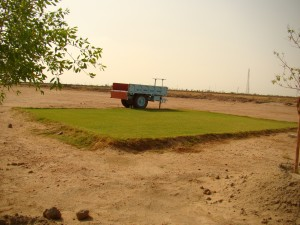 First experimental lawn successfully developed, flanked by trees that were planted and nicely grown on the wasteland.