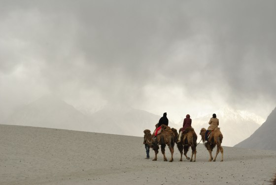 A For Apricots, B For Buddhism, C For… – Presenting The Complete A to Z of Leh, Ladakh