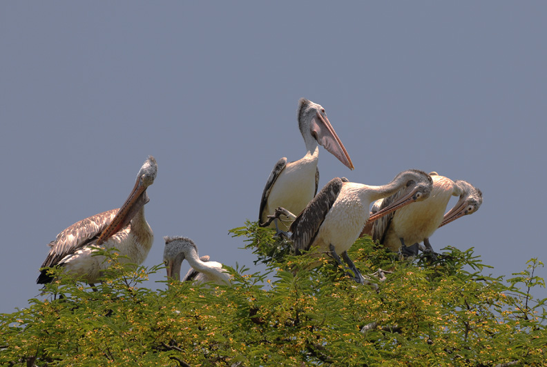 A Village Where Farmers Adopt And Nurture Rare Birds Even If They Harm The Crops!