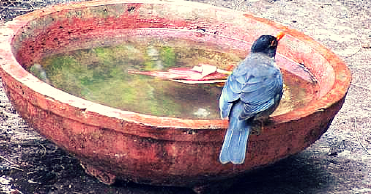 No More Angry Birds – Use This App to Provide Water to Thirsty Birds