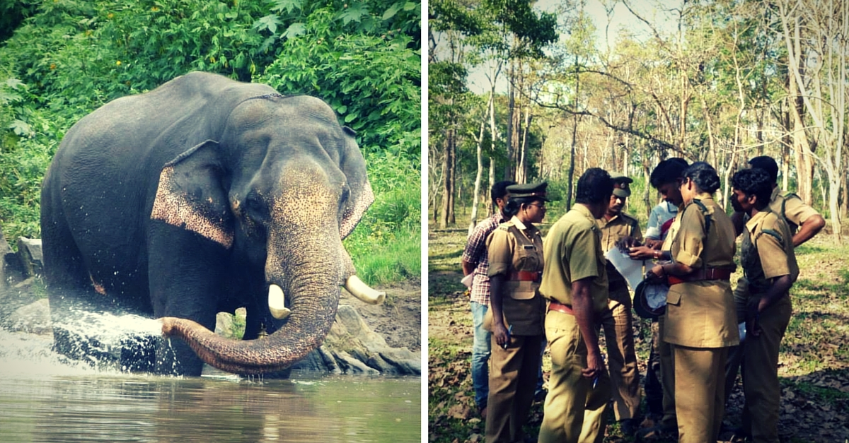 A Mobile-Based Service that Uses Community Power to Save Elephant & Human Lives in the Nilgiris
