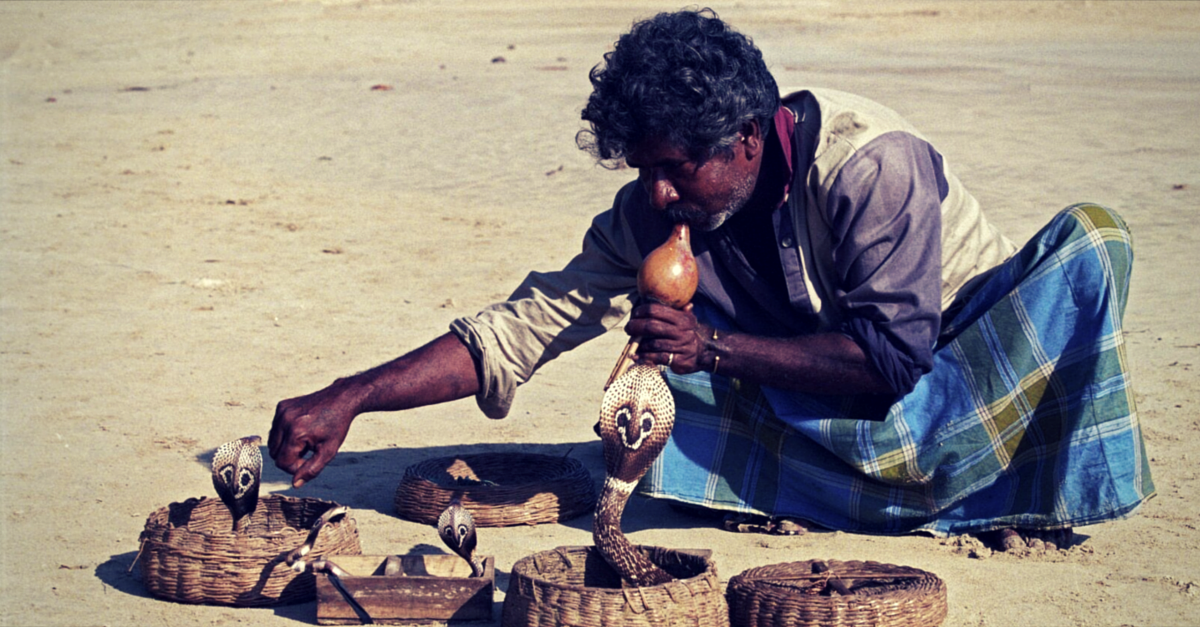 Hundreds of Snakes Die a Painful Death After Nagpanchami. Here's How One Team Is Helping Them