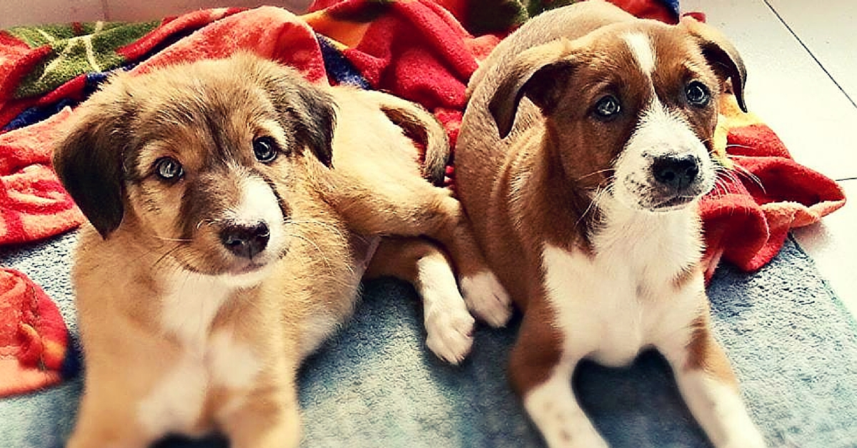 How Two Sisters and Their Puppy Love Led to over 100 Strays Finding Loving Homes