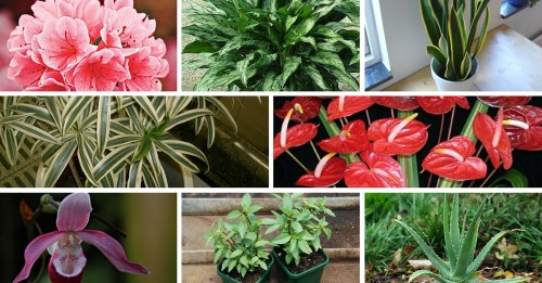 10 Indoor Plants That You Can Grow In Your House Right Now The Better India