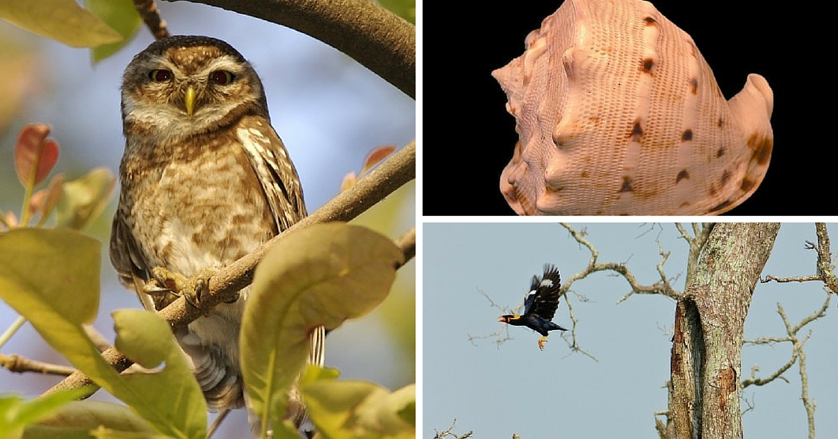 TBI BLOGS: 7 Wildlife Creatures Illegally Traded in India. And How We Can Save Them.