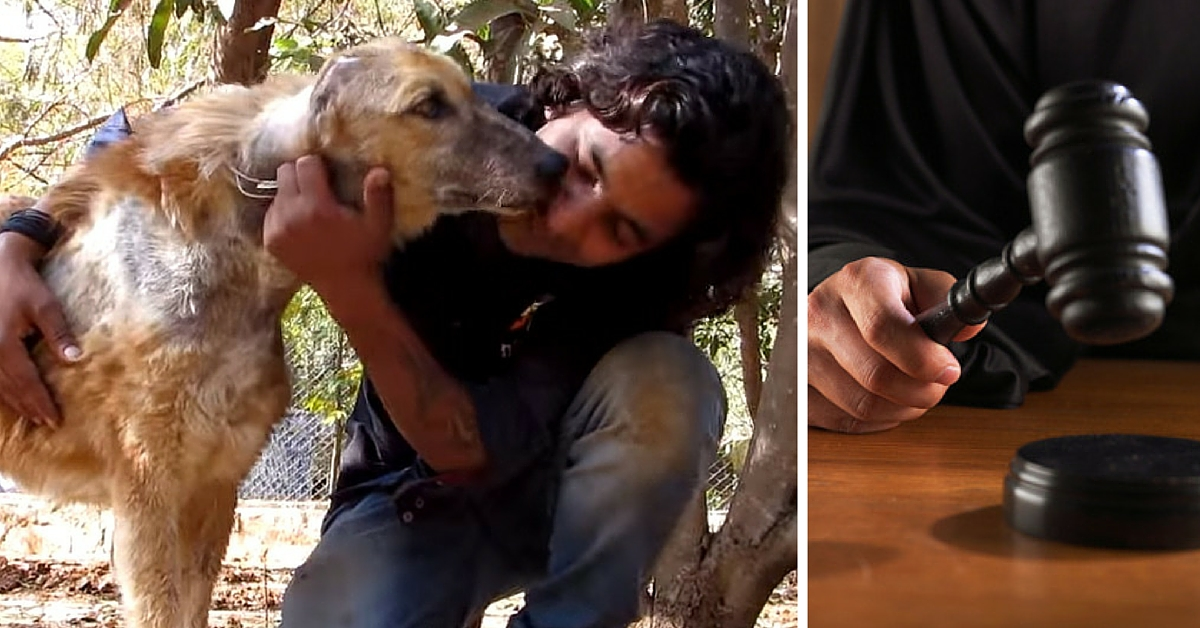 TBI BLOGS: 7 Landmark Judgements That Were Big Wins for Animal Welfare in India