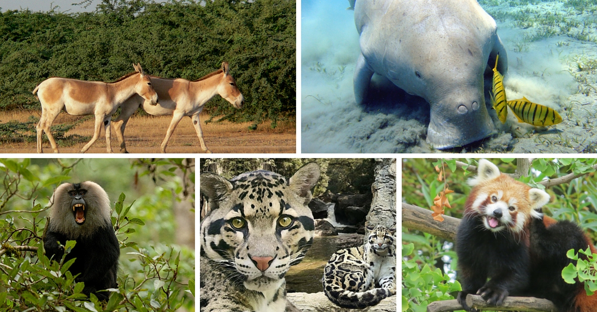 Time is Running Out for These 16 Endangered Wildlife Species in India. Learn More About Them.