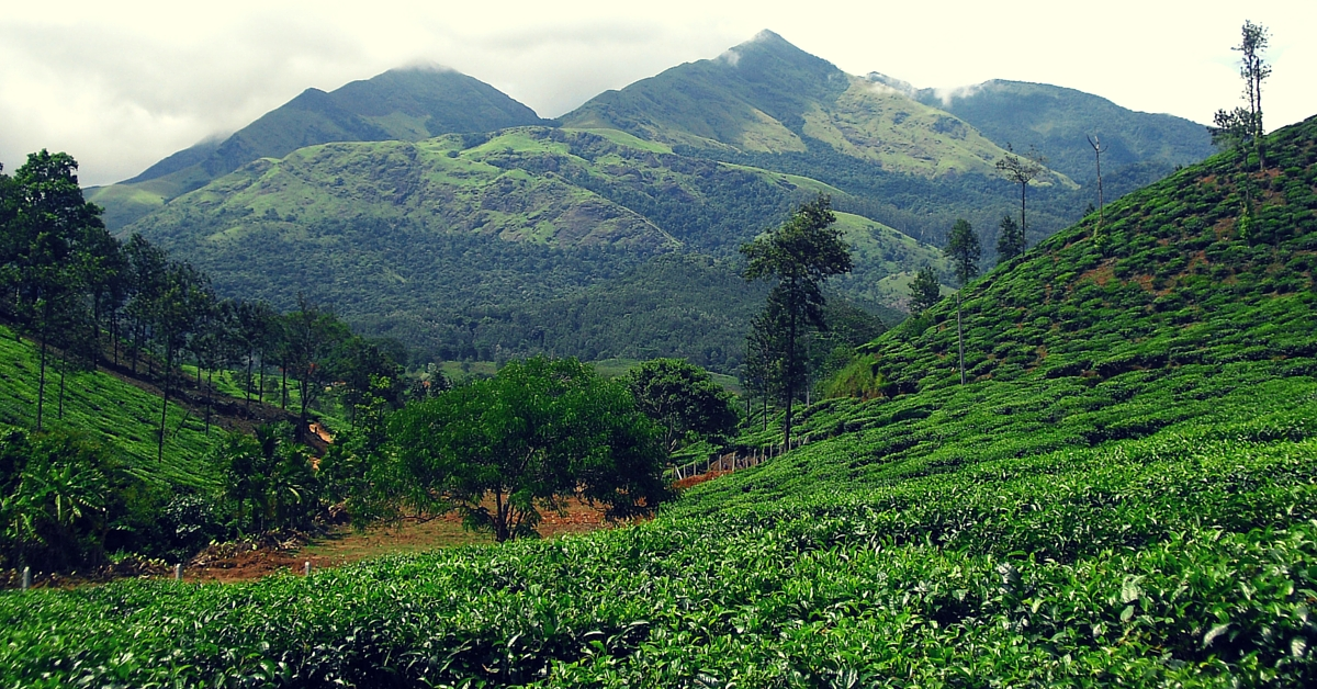 Tree Planting, Smokeless Ovens, LED Lights & More on Cards to Help Wayanad Go Carbon Neutral