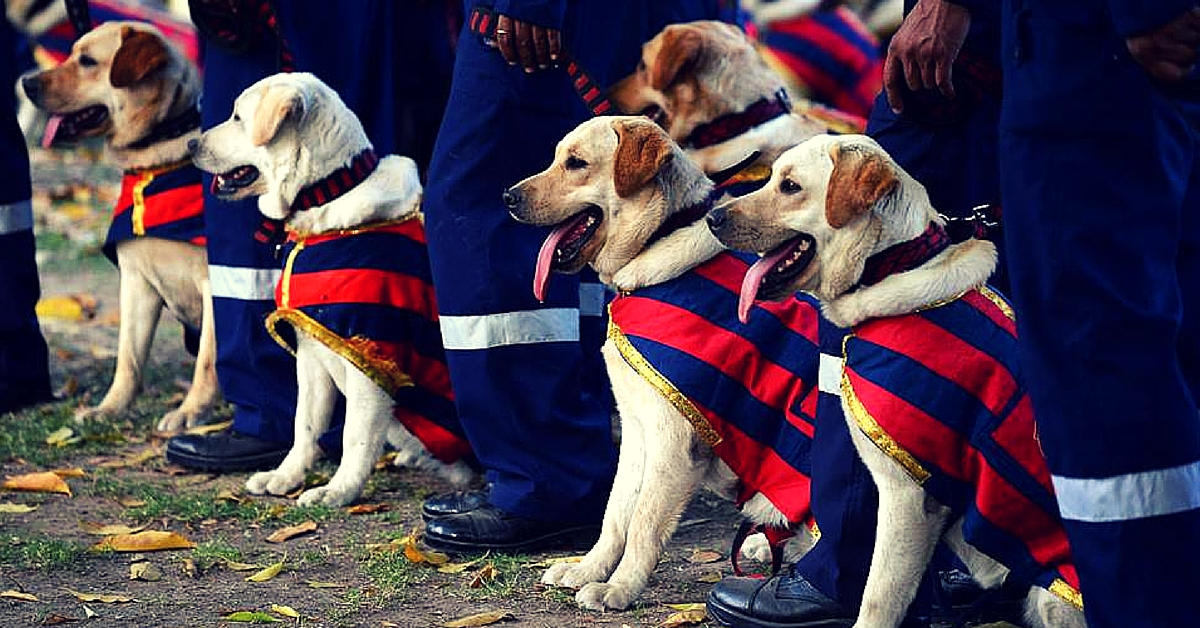 Who Can Guard Your Home Better Than a Police Dog? Karnataka Residents Can Now Adopt Retired Ones.