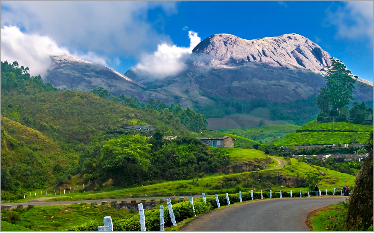 #TravelTales: A Visit to the World's Highest Organic Tea Estate Where Tea Is Still Made by Hand