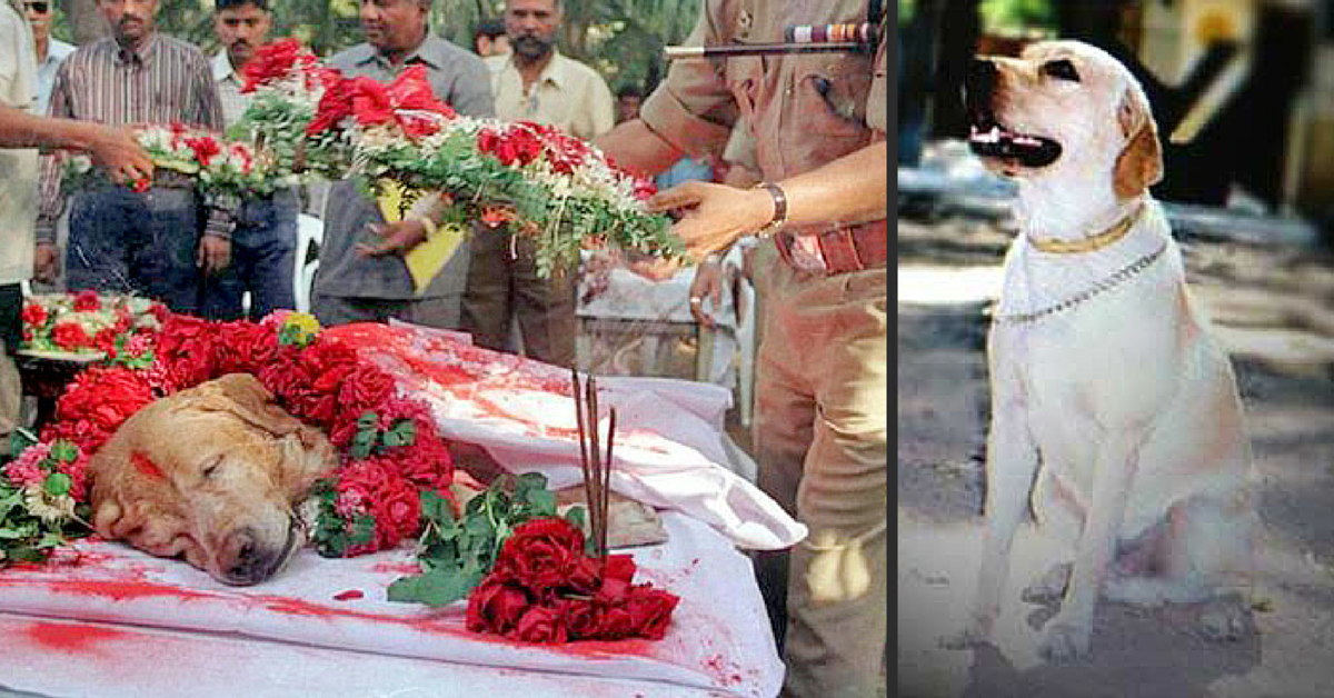 Remembering Zanjeer, the Heroic Dog Who Saved Thousands of Lives in the 1993 Mumbai Blasts