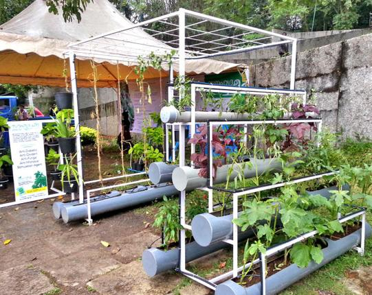 Growing Soil-Less With Hydroponics: An Introduction to Innovative Farming at Home