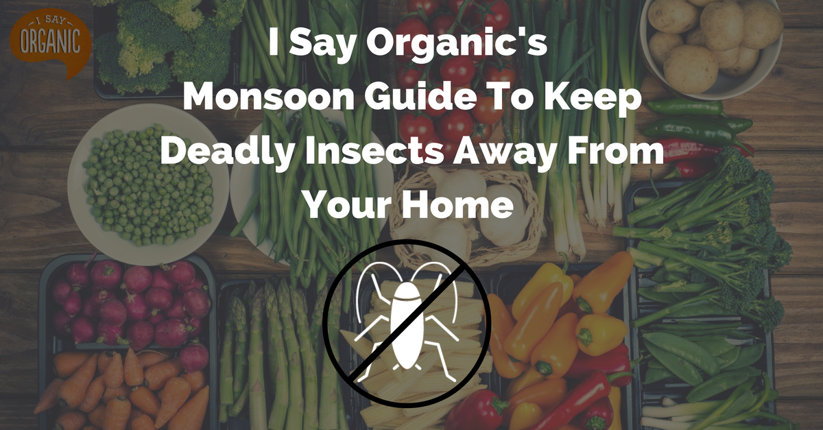TBI Blogs: Natural Tricks to Kick Those Deadly Insects out of Your Home
