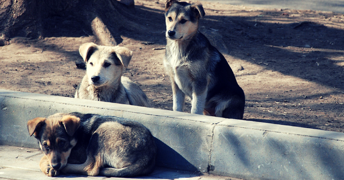TBI Blogs: A Look at How Animal Groups Have Used Technology to Tackle the Problem of Rabies with Compassion