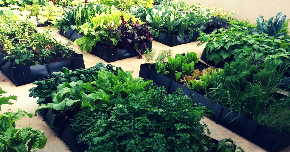 Image of: Everything You Ever Wanted To Know About Starting A Vegetable Garden In Your Own Home