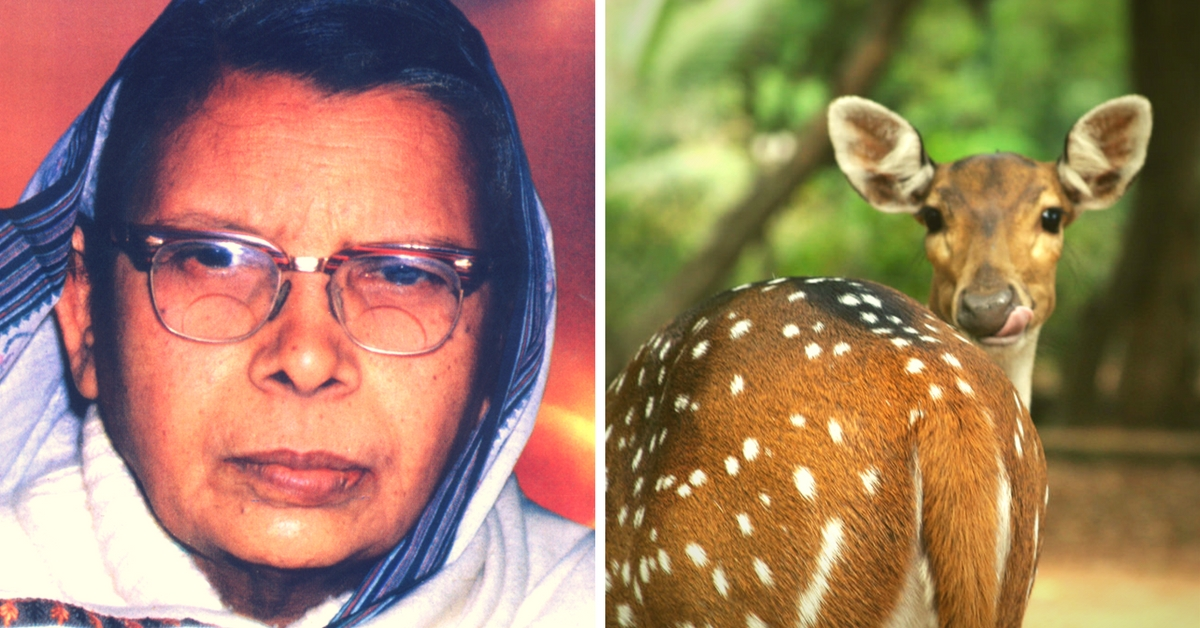5 Beautiful Stories on Animals by Mahadevi Verma – A Strong Advocate against Animal Cruelty