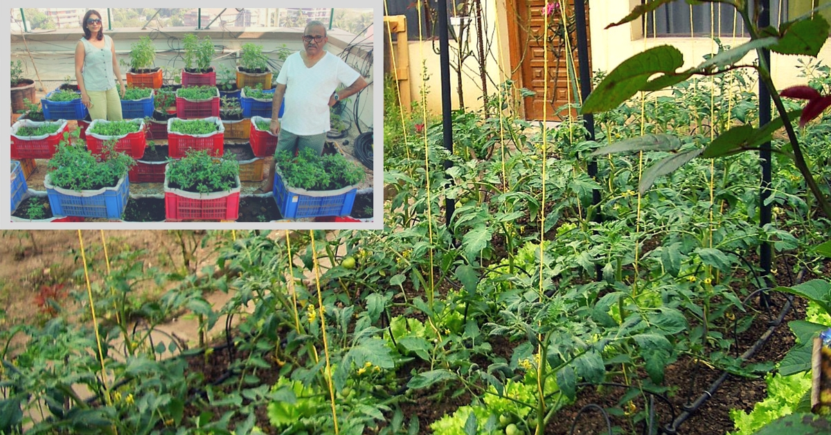 These Mumbai Residents Recycle Waste & Use It to Grow Vegetables & Fruits on Their Terrace!
