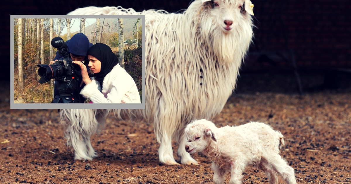 Kashmiri Siblings Make Award Winning Documentary Film on the First Cloned Pashmina Goat