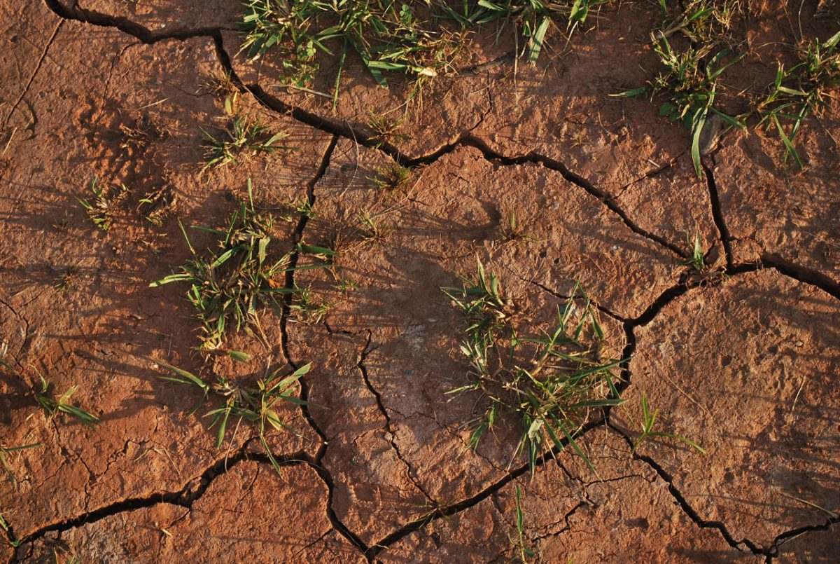 TBI Blogs: How the Supreme Court Came to the Rescue of India's Drought Victims