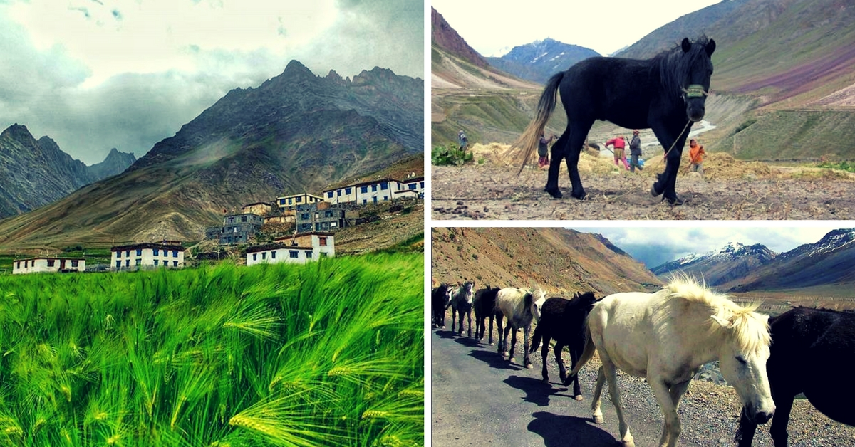 A Village in Spiti's Pin Valley Runs a Dedicated Insurance Scheme for Its Unique Horses