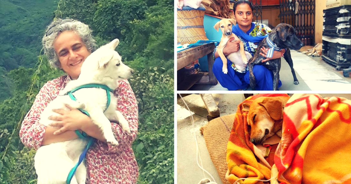 This Feisty Animal Lover and Her Team Feed Over 10,000 Street Dogs Every Month!
