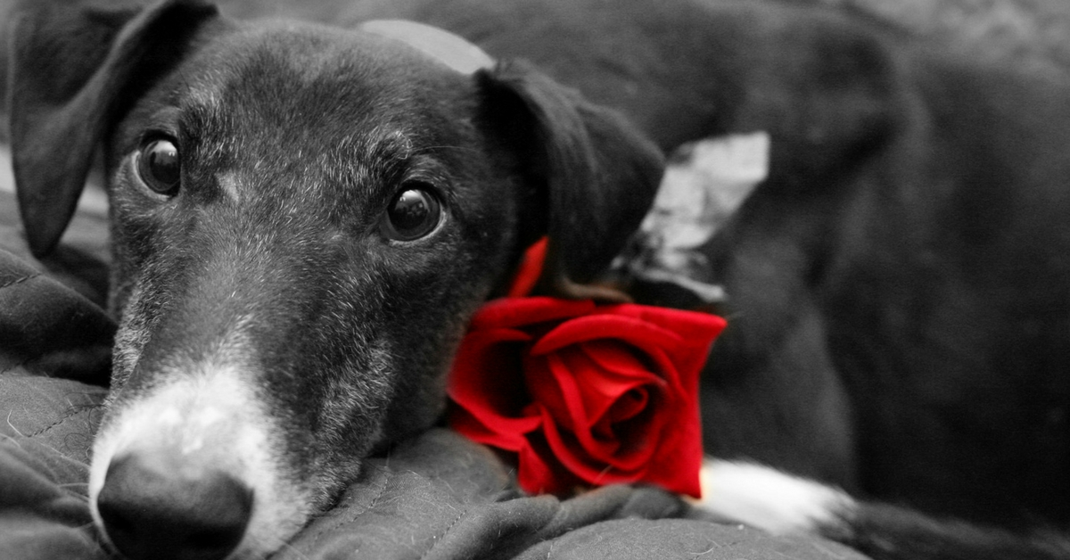 TBI Blogs: Here Are 10 Reasons to Make Valentine's Day Special – for a Four-Legged Special Someone!