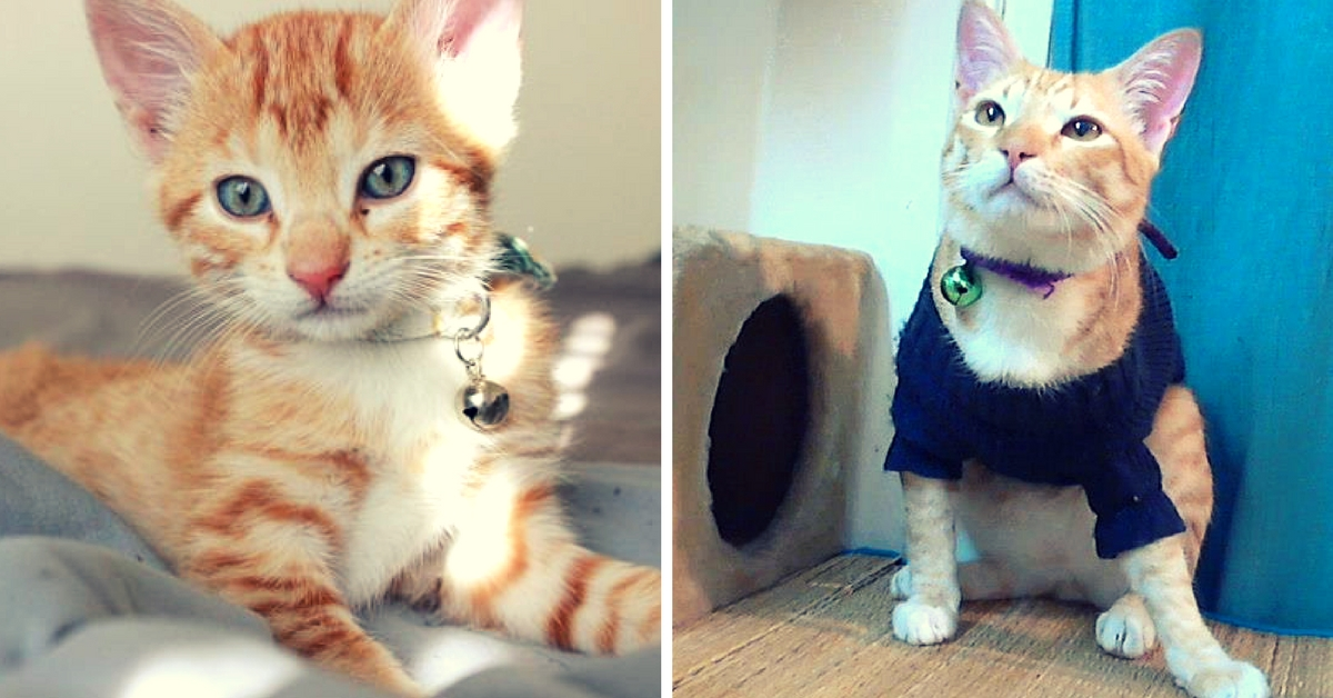 MY STORY: What an Abandoned Kitten Named Bubble Taught Me About Love, Life and Laughter