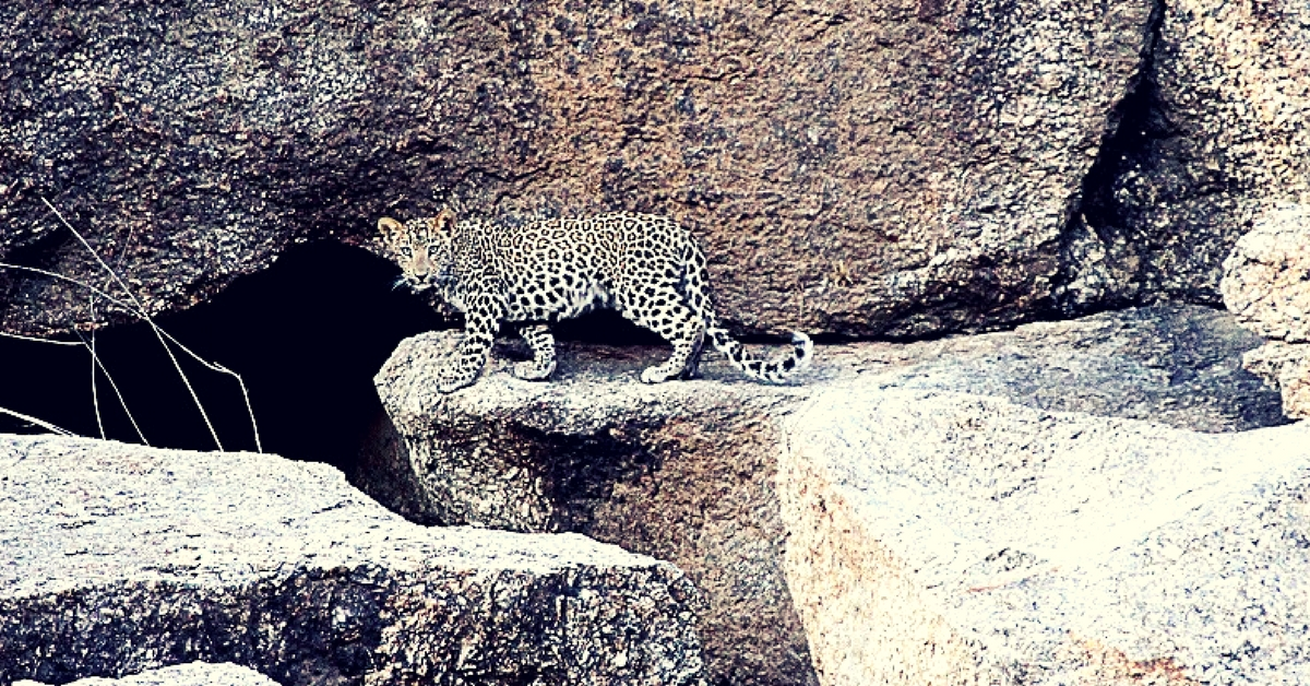 #TravelTales: The Rajasthan Villages Where Leopards and Humans Live in Harmony