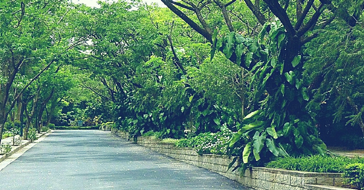 112 Trees in Bengaluru Are in Danger of Being Cut Down – You Can Save Them by Acting Quickly!