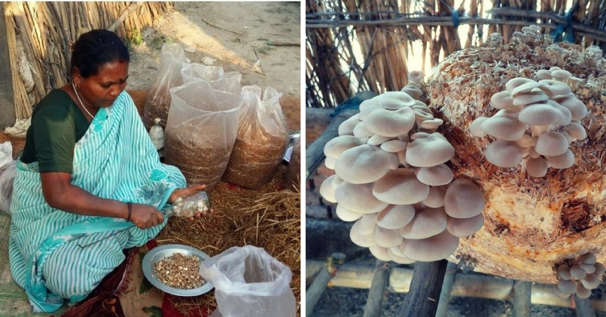 TBI Blogs: How Mushroom Cultivation Is Changing the Fortunes of Women in Rural India
