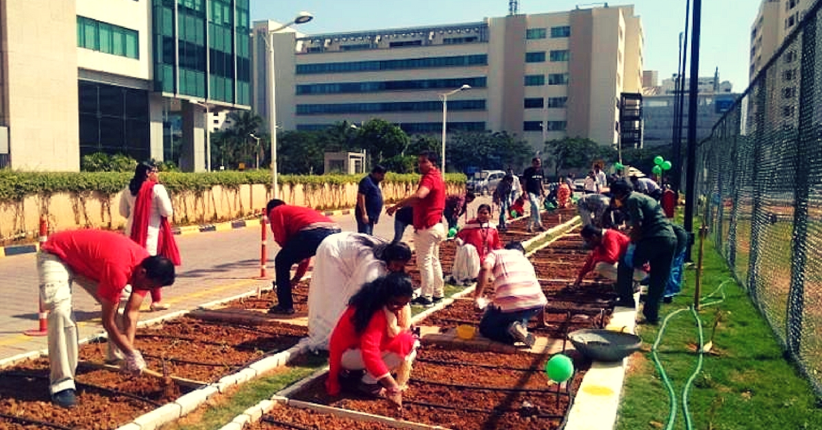 Bengaluru Techies Turn to Gardening at Work, Grow Their Own Greens to De-Stress