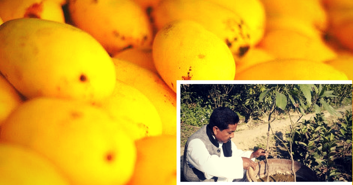 Craving Mangoes This Summer? You Can Order an Entire Tree on WhatsApp!