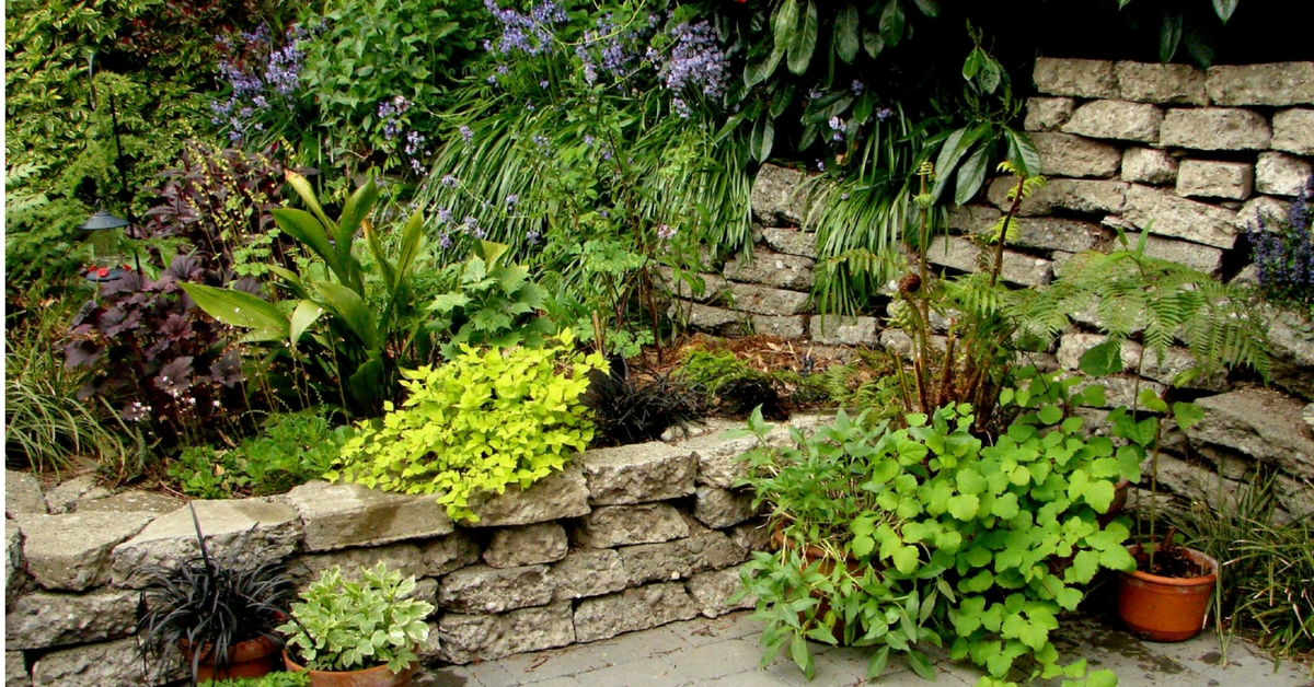 Summer Gardening Tips To Keep Your Plants Fresh Blooming