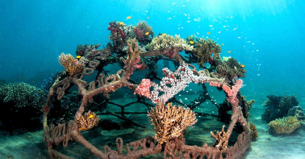 How Scientists Are Using Solar Energy to Regenerate Extinct Coral Reefs in India