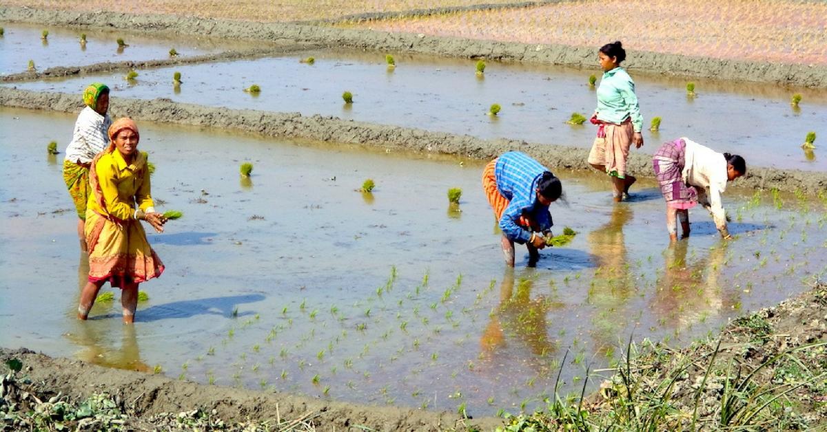 TBI Blogs: How a Revolutionary Programme Transformed a West Bengal Village Through High-Quality Farm Produce