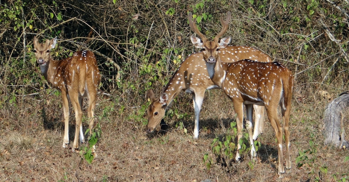 A DNA Bank for Wild Animals? Bareilly Scientists Hope It Will Keep Poaching in Check