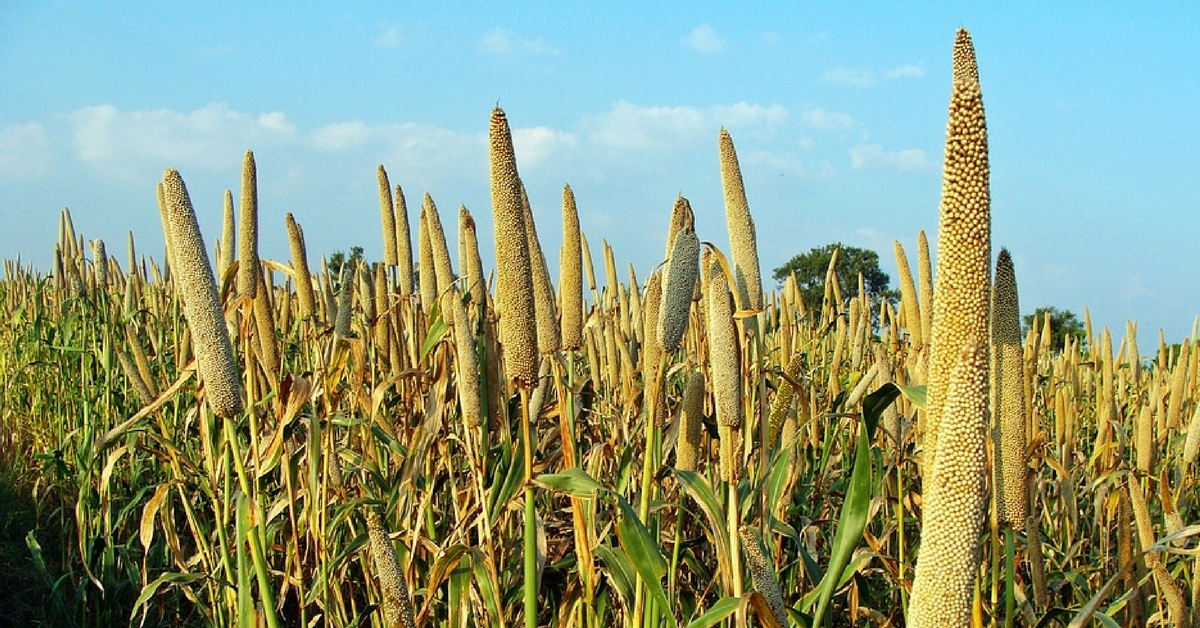 Karnataka's Unlikely Hero, the Humble Millet, Is Helping Farmers Fight Drought & Citizens Get Healthy