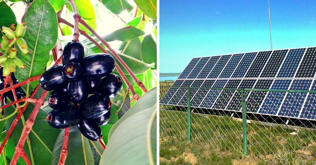 IIT Roorkee Scientists Are Using Jamuns to Make Cheap Solar Cells. We're Not Kidding!