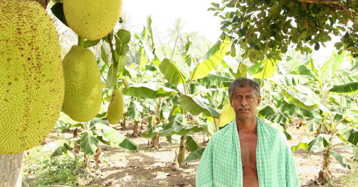 TBI Blogs: How Growing Trees and Crops Together Is Helping Tamil Nadu's Farmers Earn Better