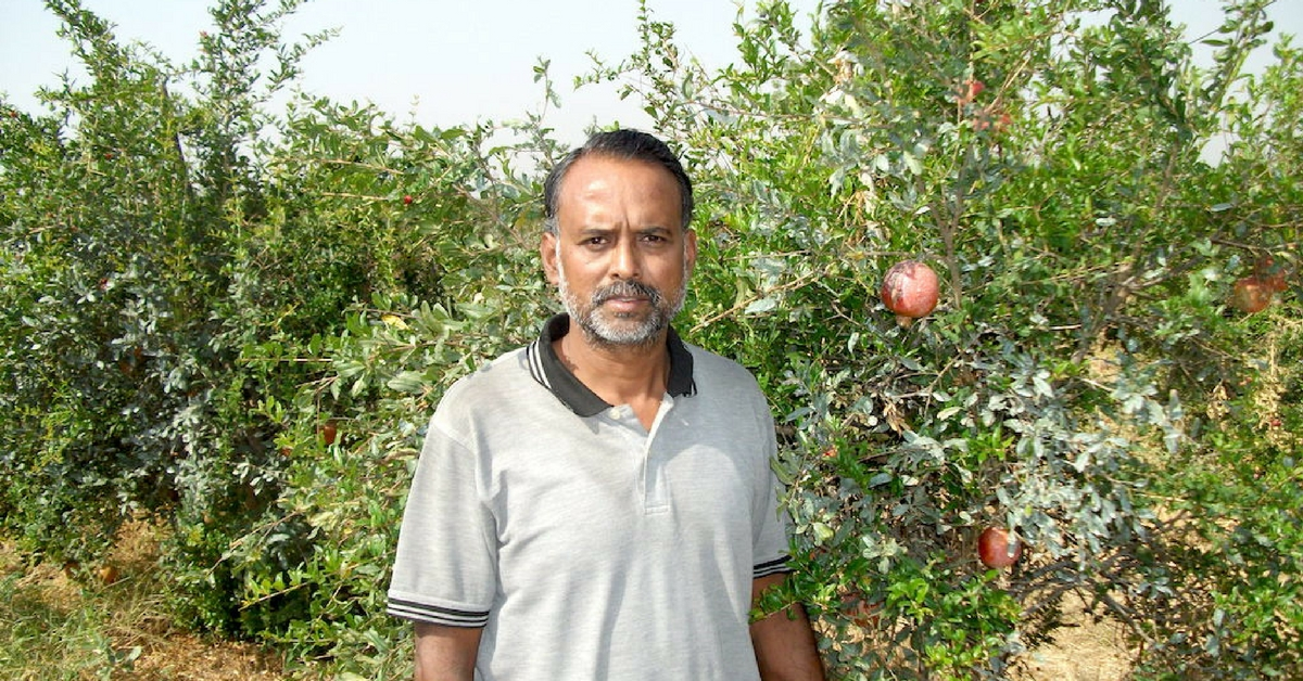 TBI Blogs: India Grows 6 of the World's Finest Varieties of Pomegranates, Helping Farmers Make Huge Profits