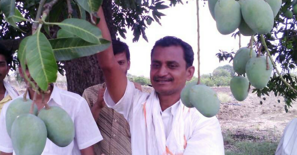 51 Types of Mango on One Tree! An Engineer-Turned-Farmer's Unique Plan to Save Endangered Varieties
