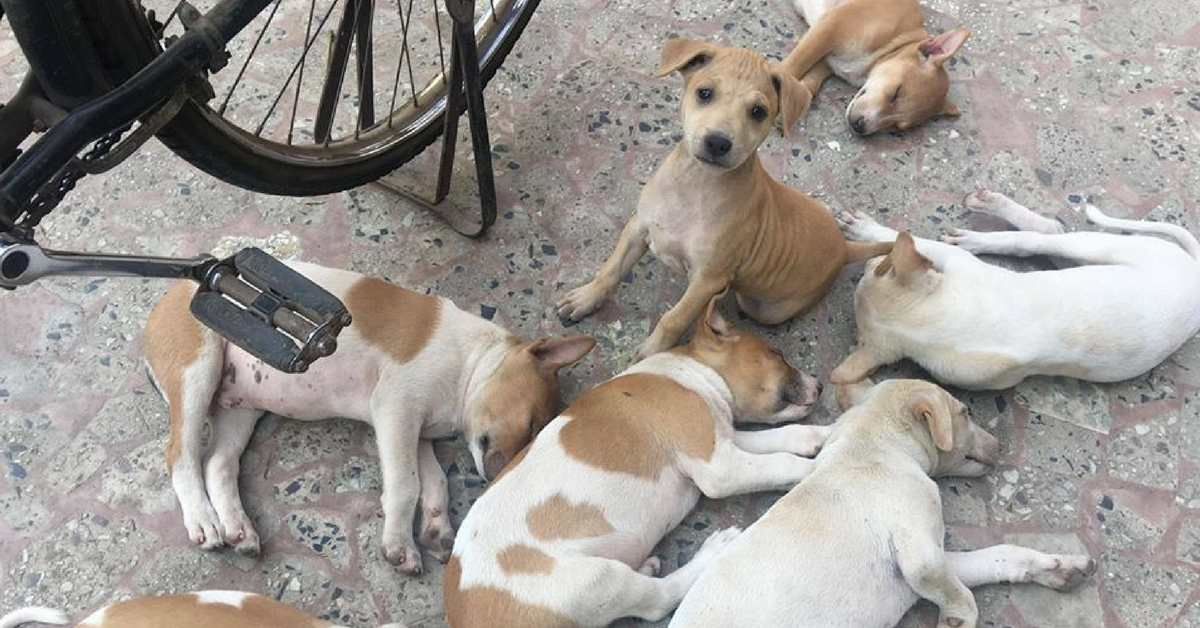 All Animals Are 'Legal Persons', Court Declares: Here's What It Means