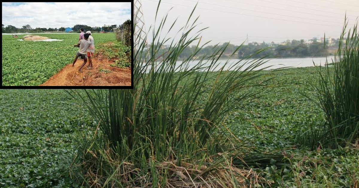 How Bengaluru Residents Revived a Dead Lake Using a Simple Tool Called 'Trash Boom'!