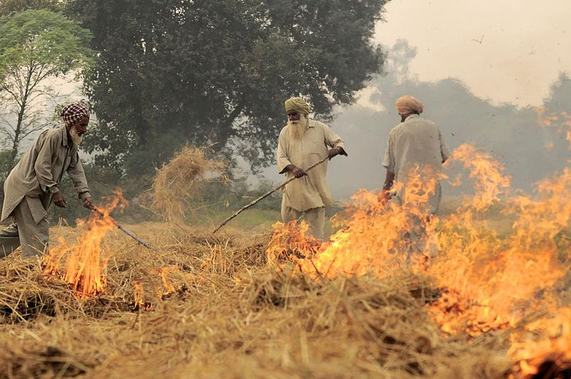 Should Farmers Still Stubble Burn? Here Is a 'Happy' Solution to This Old Practice