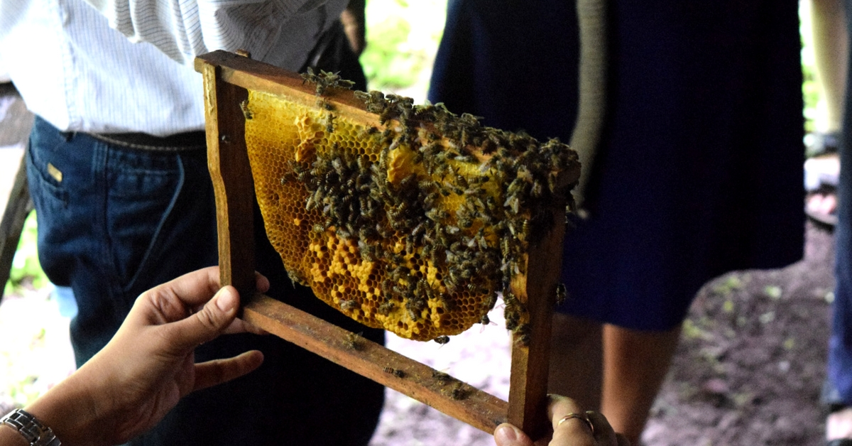 How a Story in The Better India Led to Happier Bees in Thane's Municipal Parks