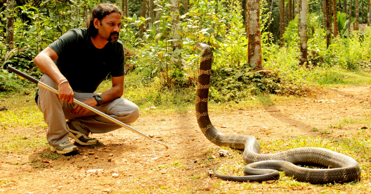 Rescuing About 300 King Cobras, This Organisation Is Helping Save Agumbe's Royal Legacy