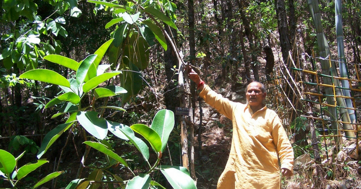 This Ex-Soldier Single-handedly Transformed a Wasteland Into a Lush Forest in Uttarakhand